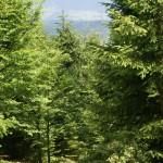 szlak lesny na Mogielicę