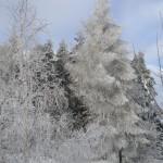 zima w Słopnicach